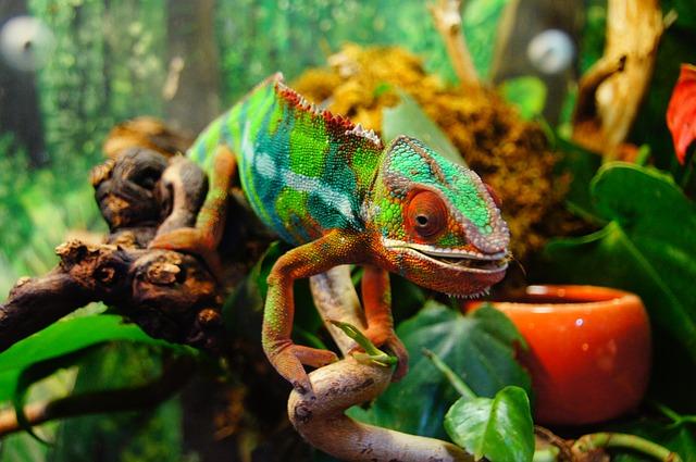 chameleon na větvičce