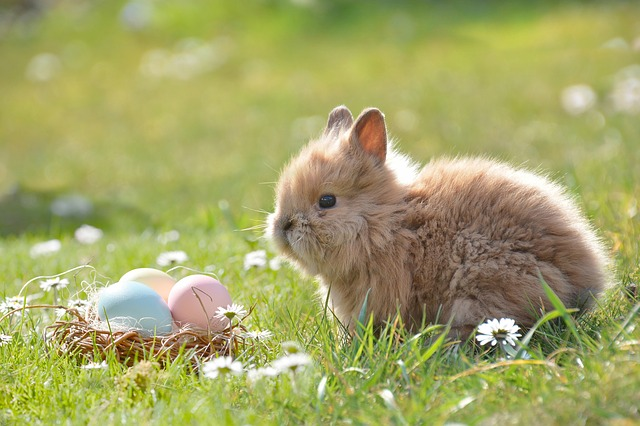 velikonoční králíček
